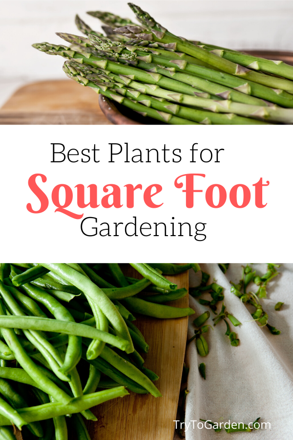 Best Plants for Square Foot Gardening