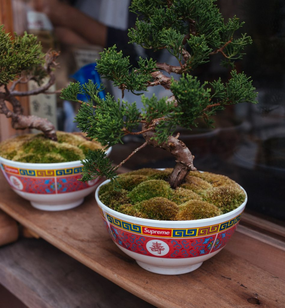 5 Important Bonsai Tools for Bonsai Growers