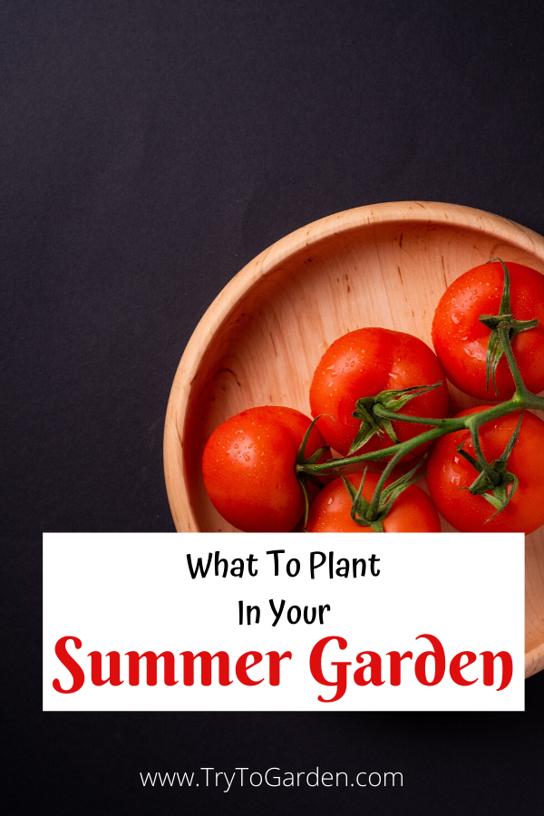 What To Plant In Your Summer Garden