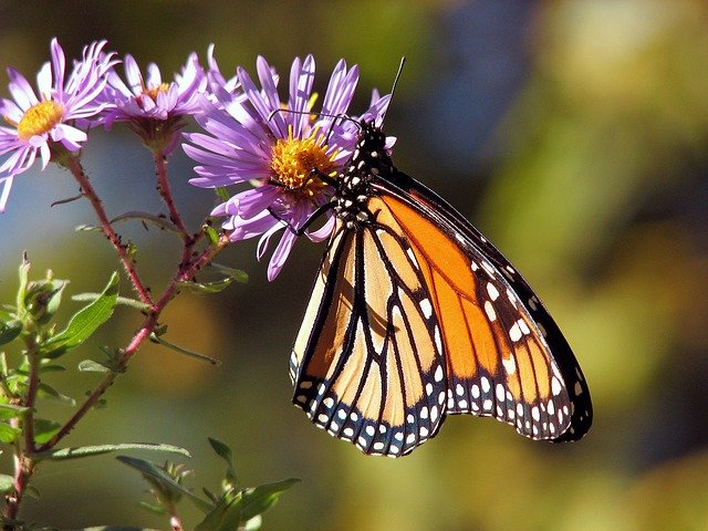 Tips for Attracting Hummingbirds and Butterflies