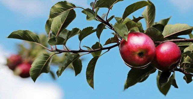 Fruit Gardening by Growing Fruit Trees