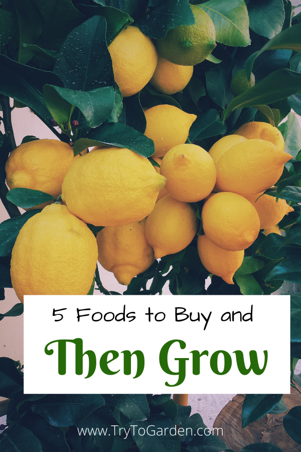 5 Foods to Buy and Then Grow
