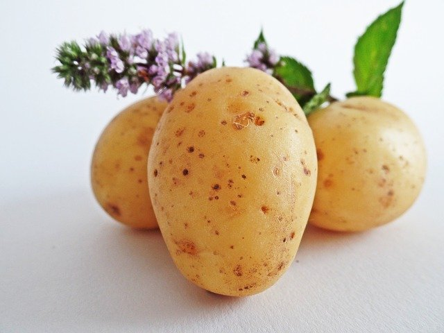Beginners Guide To Growing Potatoes In Pots