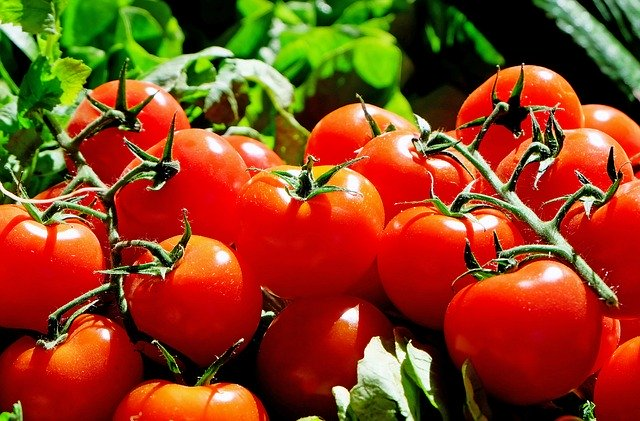 Tips and Best Plants for Square Foot Gardening