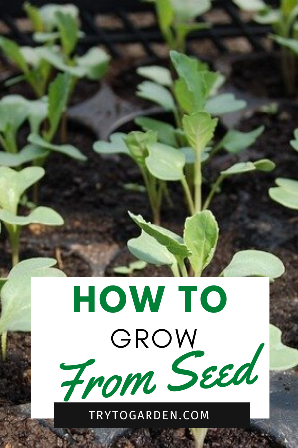Growing Seedlings: Garden Plants From Seed article cover image