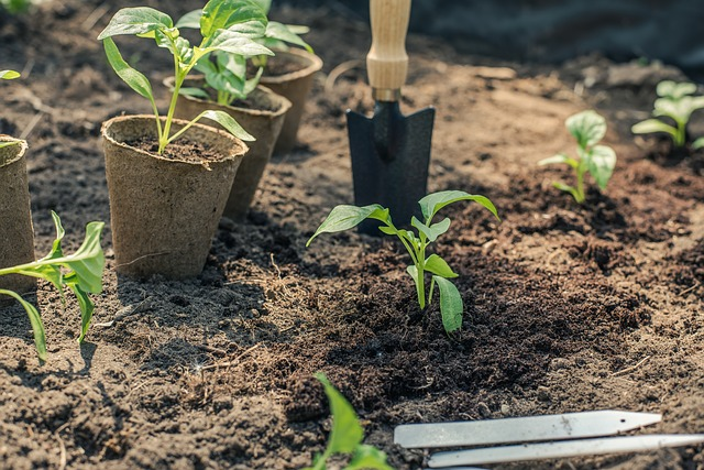 Growing Seedlings Garden Plants From Seed then transplanting to the garden bed