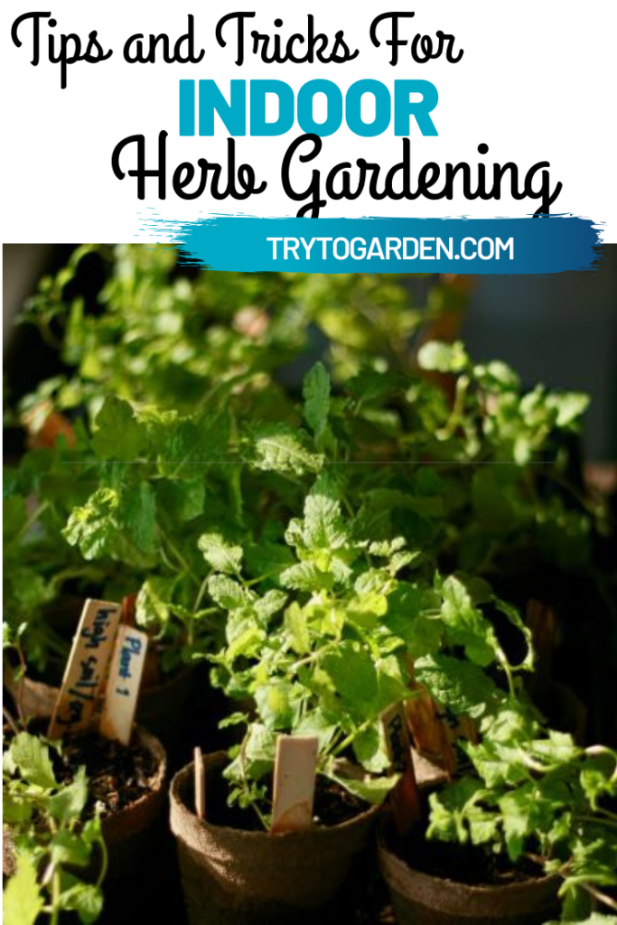 Herb Gardening Indoors – Our Tips