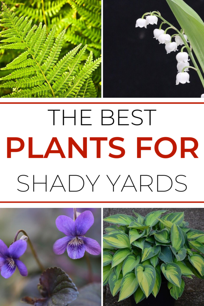 garden plants for shade cover article image