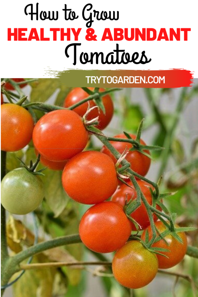 How To Have an Abundance of Tomatoes