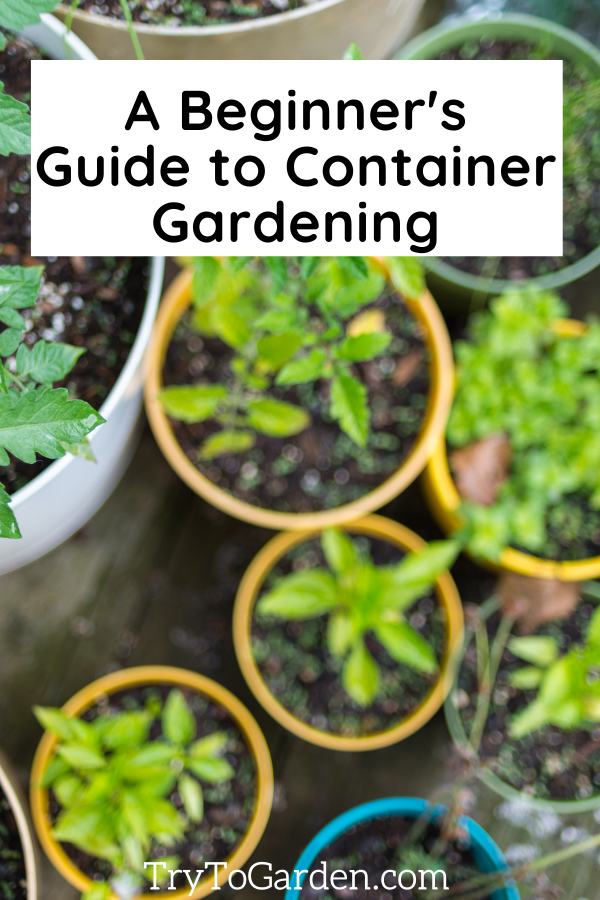 A Beginner's Guide to Container Gardening article cover image of plants in pots