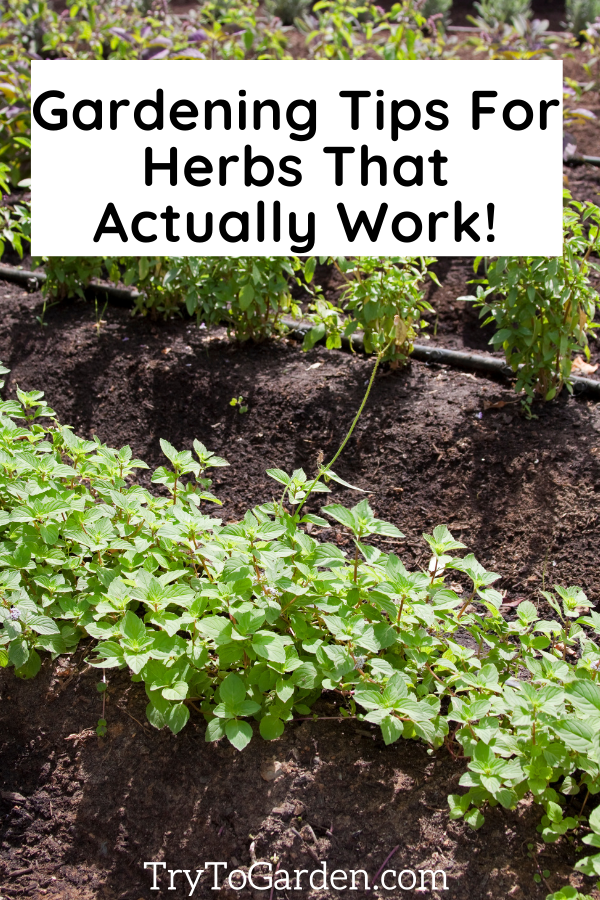 Herb Gardening Tips That Really Work! article cover image with herb garden bed