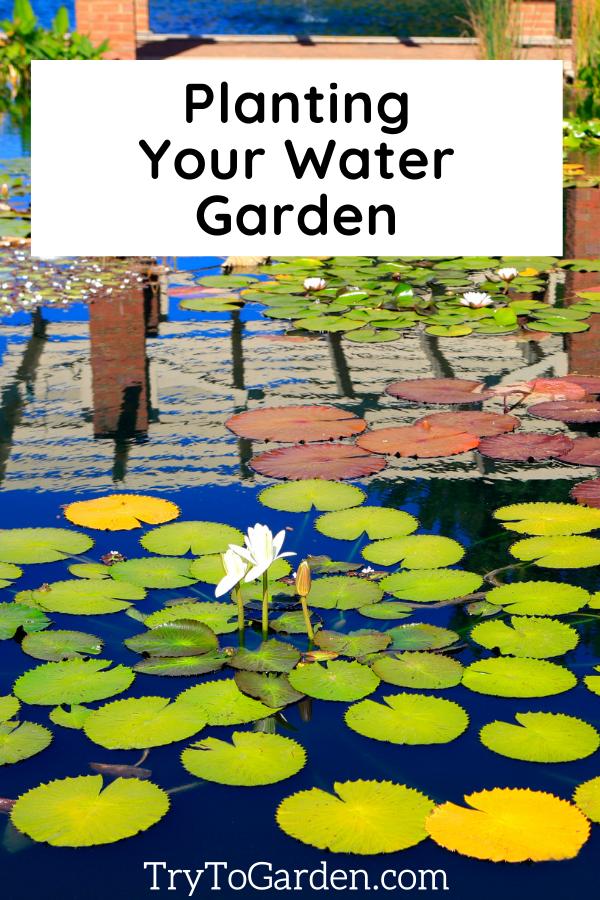 Planting Your Water Garden