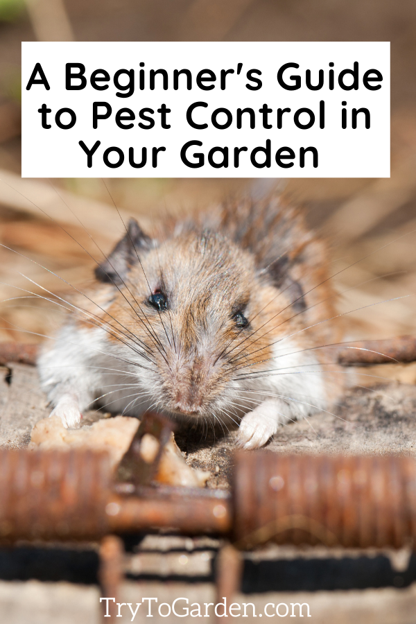 A Beginner's Guide to Pest Control in Your Garden