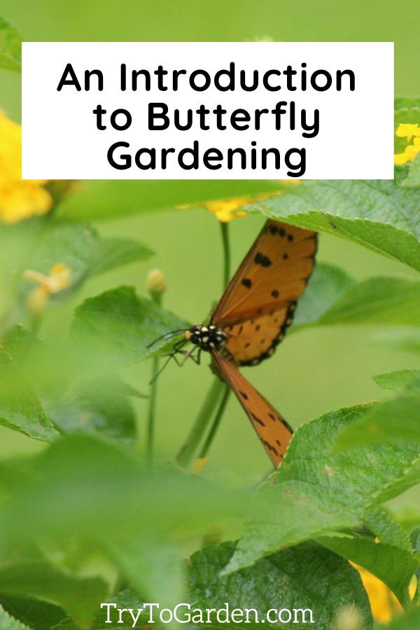 Best Starter Guide for Butterfly Gardening