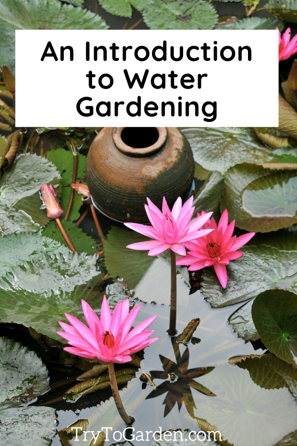 An Introduction to Water Gardening article cover image with water lillies