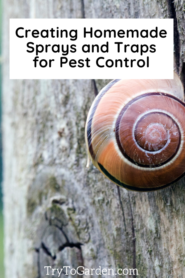 Creating Homemade Sprays and Traps for Pest Control snail on a fence post