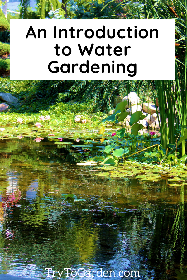 An Introduction to Starting a Water Garden