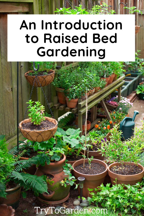 A Beginner's Guide to Container Gardening