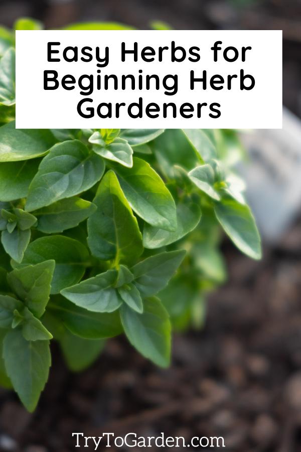 Herb Gardening Tips That Really Work! basil