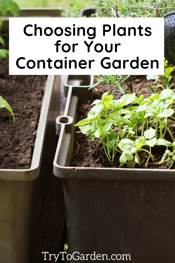 Choosing Plants for Your Container Garden