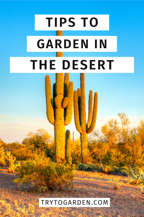 How to Garden in the Desert article cover image of the desert with cacti