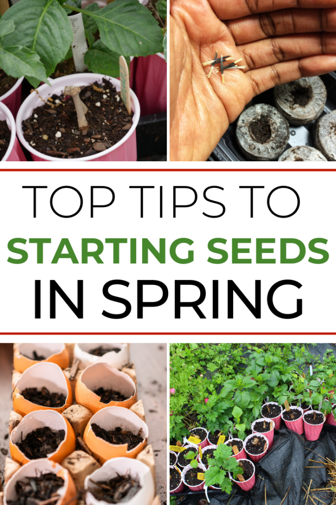 Top Tips to Starting Seeds In Spring article cover image