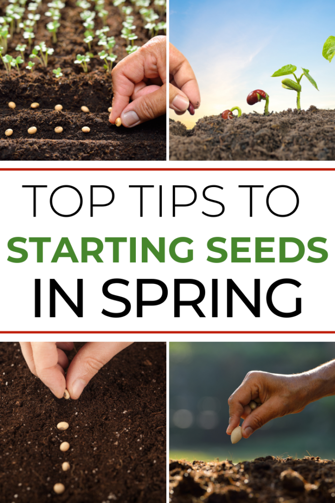 Top Tips to Starting Seeds In Spring