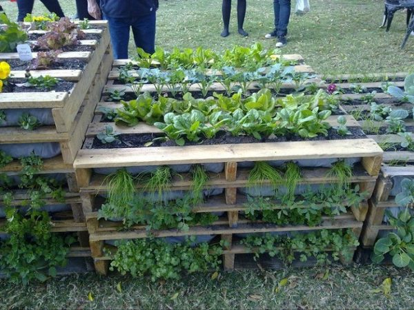 Using Pallets in the Garden picture of a square stacked garden