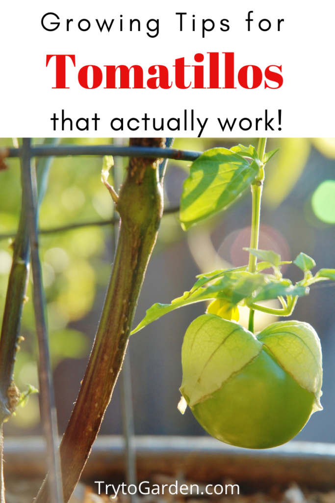Gardening Tips for Tomatillos That Actually Work!