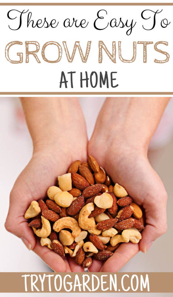 Try These Easy to Grow Nuts at Home
