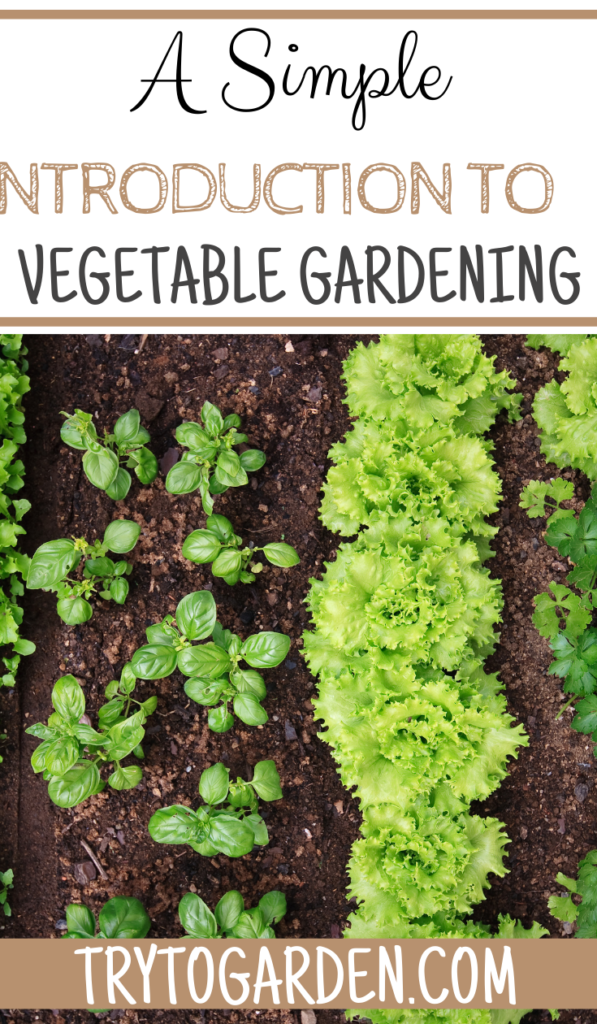 A Simple Introduction to Vegetable Gardening