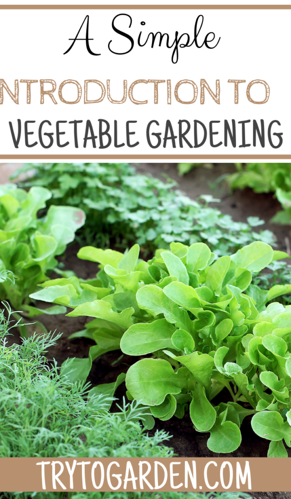 Introduction to Vegetable Gardening article cover image