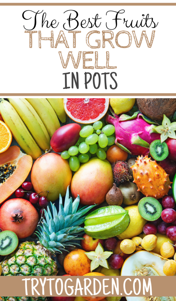 The Best Fruits That Grow Well in Pots article cover imge