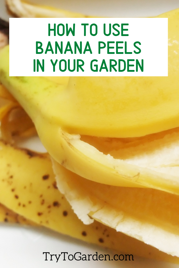 How to Use Banana Peels For Plants in Your Garden