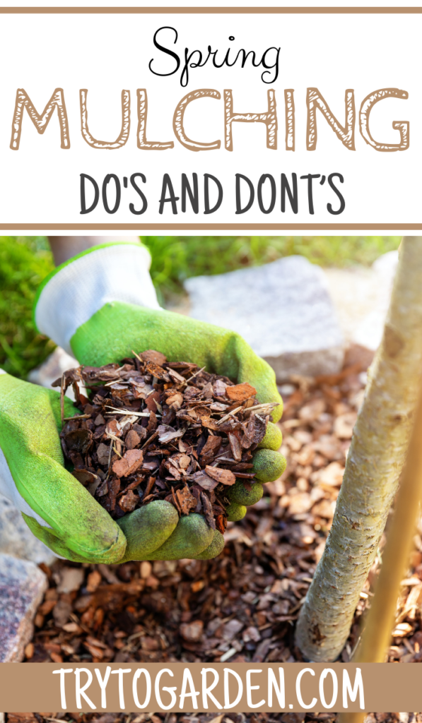 Awesome Spring Mulching Do's and Dont's article cover image of a woman mulching