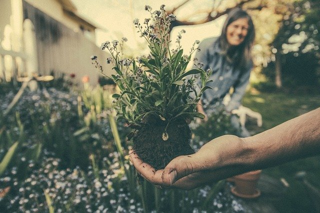 Gardening Zones: What to Plant When