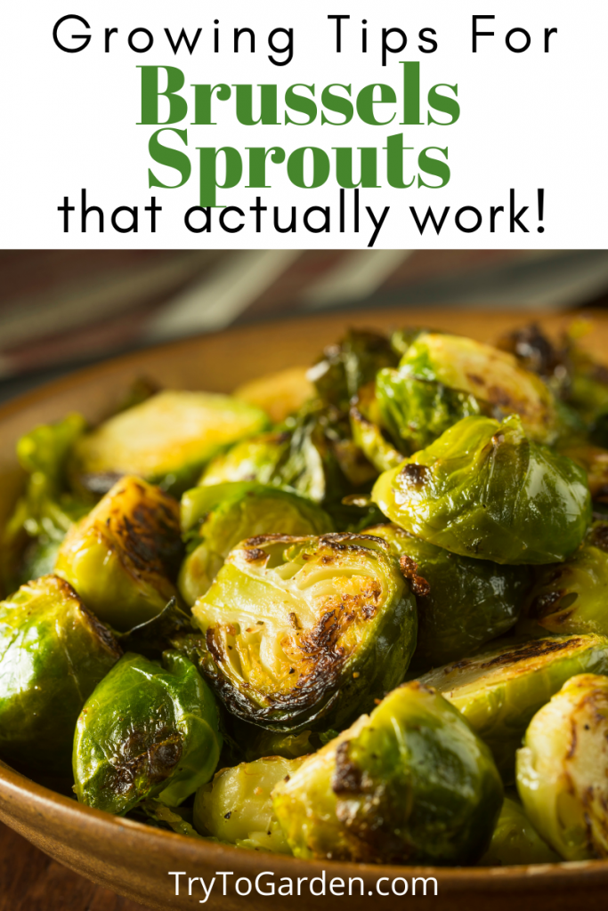Gardening Tips for Brussels Sprouts That Really Work