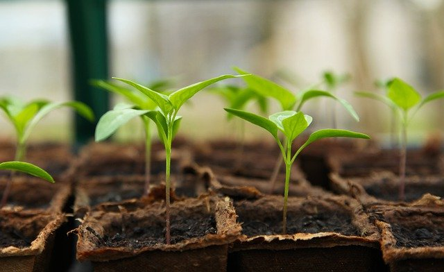 10 Top Gardening Tips for Beginners To Start With