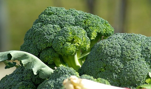 Gardening Tips for Broccoli That Actually Work!
