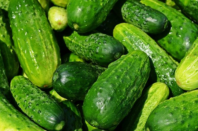 Gardening Tips for Cucumbers That Really Work