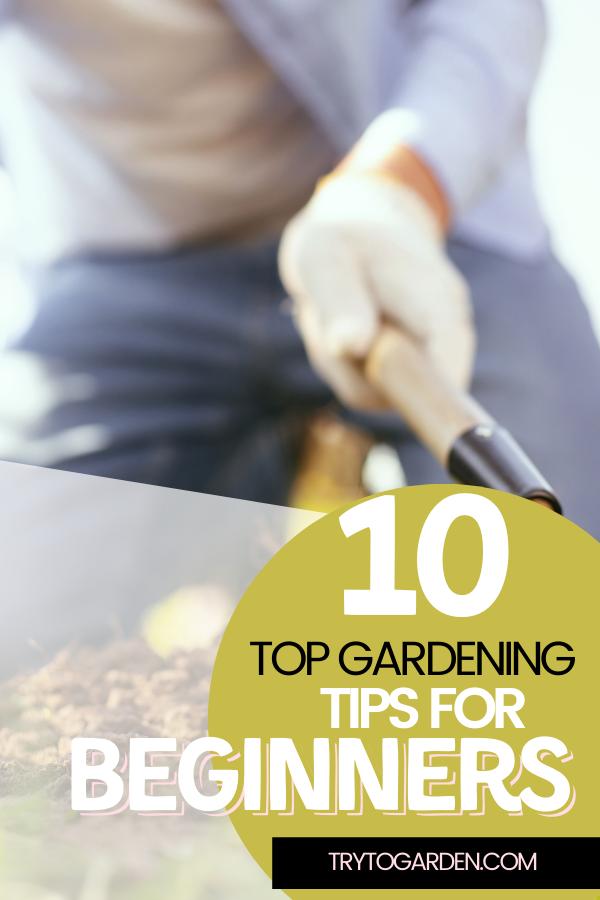 10 Top Gardening Tips for Beginners
