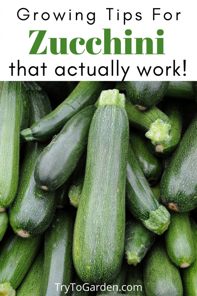 Gardening Tips for Zucchini That Actually Work!