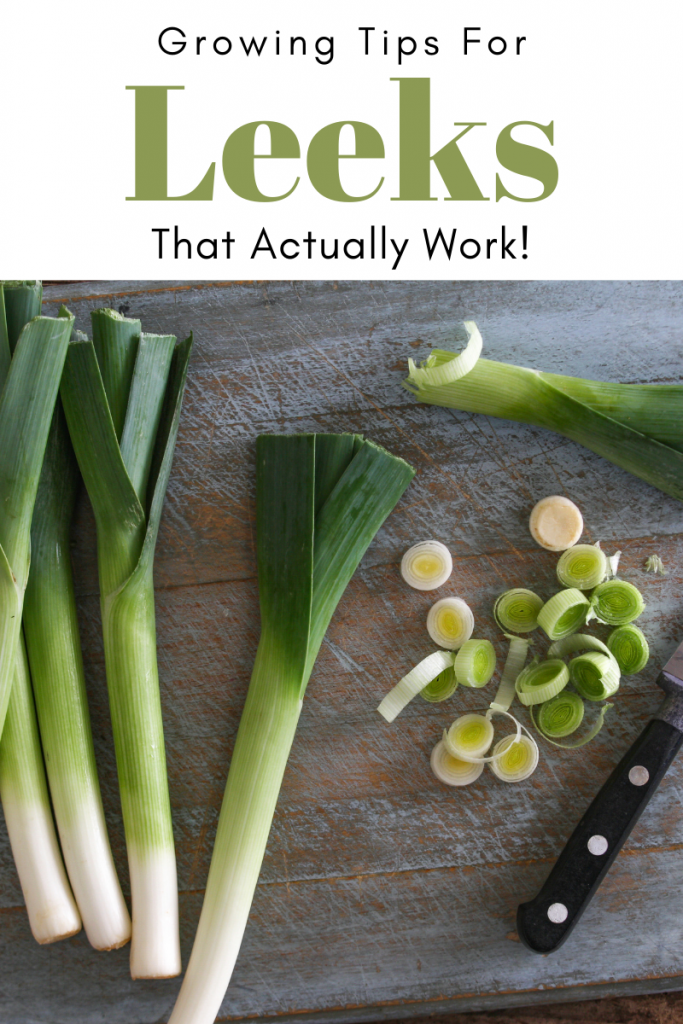 Gardening Tips For Leeks That Actually Work!