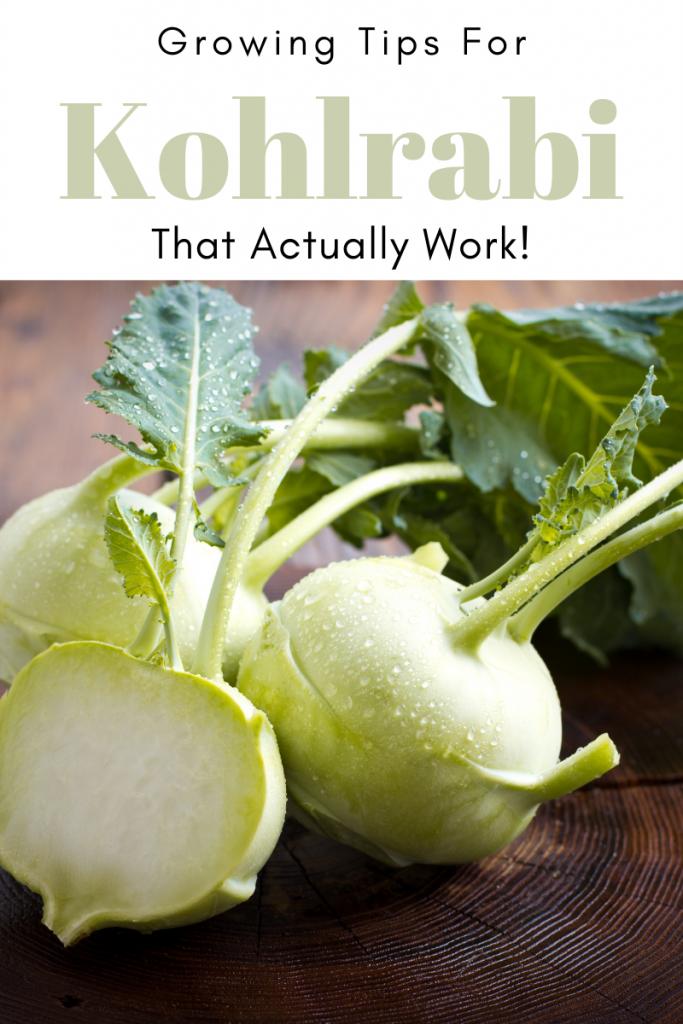 Gardening Tips for Kohlrabi that Actually Work!