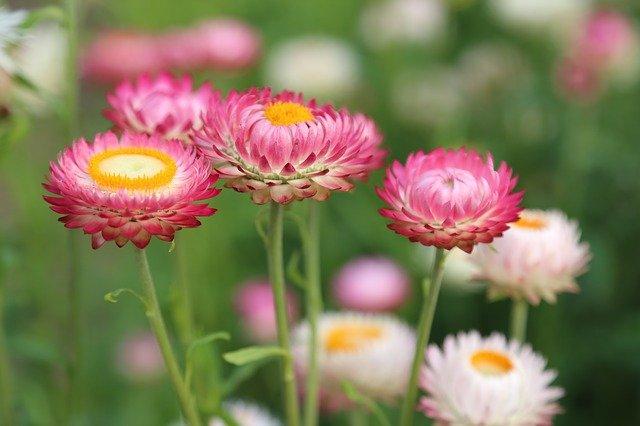 A Great Beginner's Guide to Flower Gardening